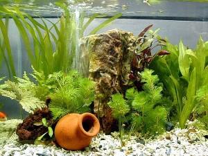 Бизнес выращивание в аквариуме 436
