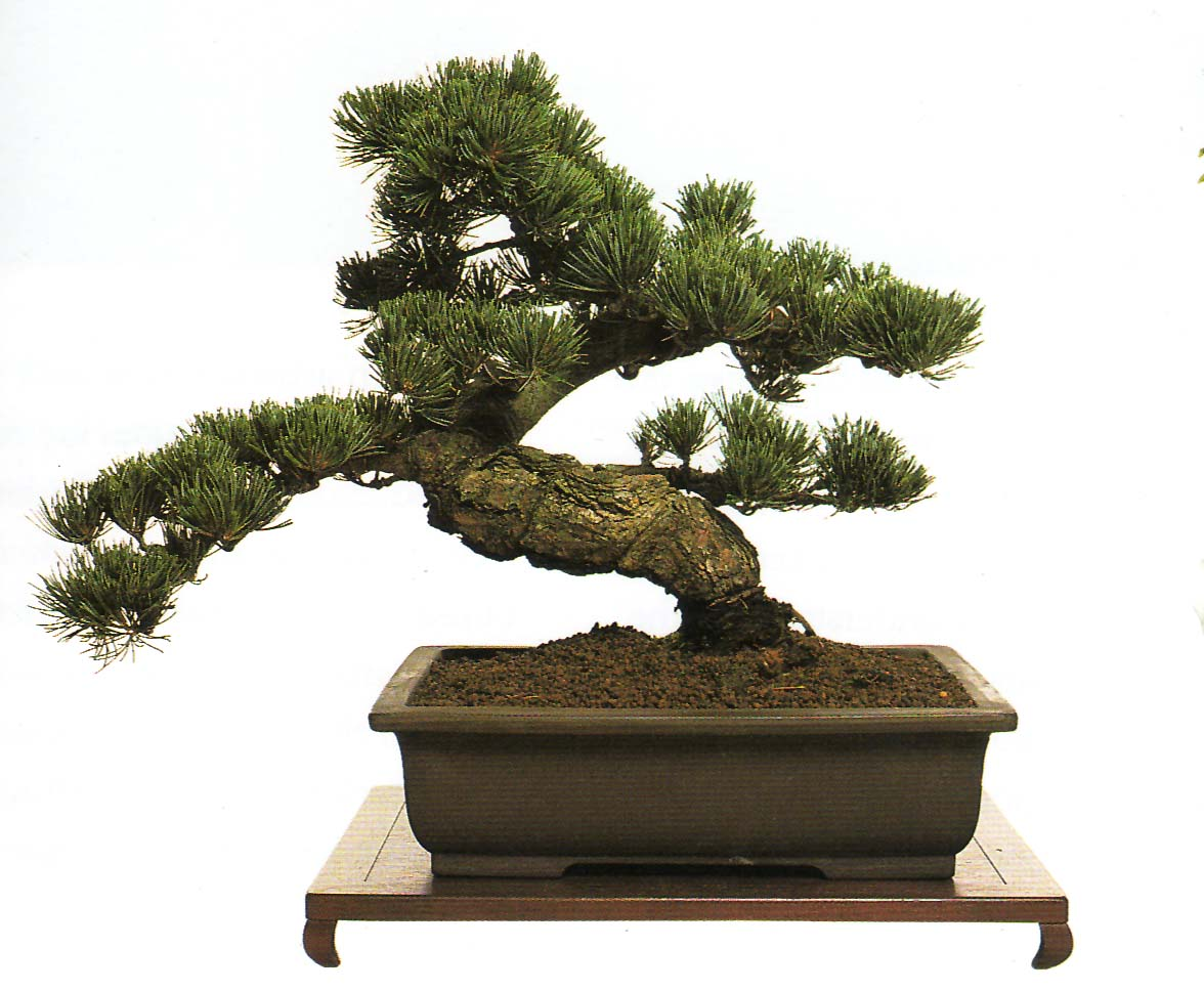 Скачать Bonsai Pictures.