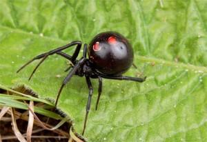 Разведение пауков | Бизнес идеи