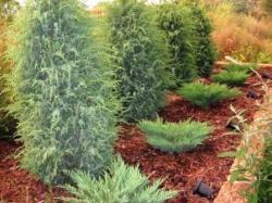 Выращивание декоративных кустарников | Бизнес идеи