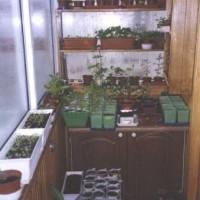 Огород в городской квартире | Бизнес идеи