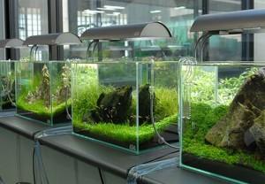 Сборка аквариумов | Бизнес идеи