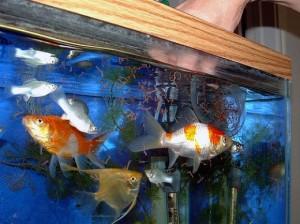 Разведение аквариумных рыбок | Бизнес идеи