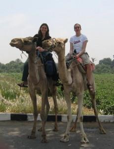 Катание на верблюде | Бизнес идеи
