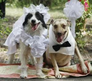 Свадебное агентство для животных | Бизнес идеи