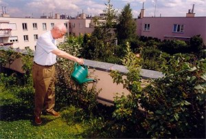 Установка садов на крыше | Бизнес идеи