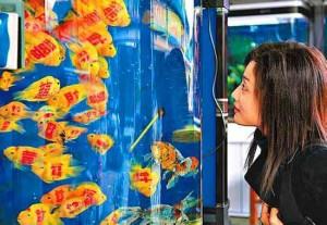 Рыбки с татуировками | Бизнес идеи