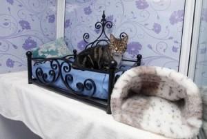 Роскошный кошачий отель | Бизнес идеи