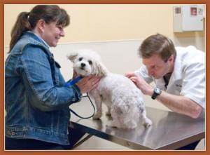 Скорая ветеринарная помощь для домашних питомцев   Бизнес идеи