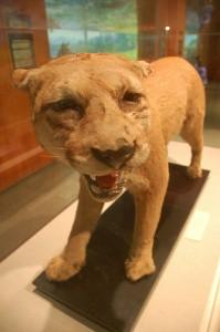 Музей чучел всевозможных животных | Бизнес идеи