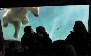 Рыбный автомат для зоопарка | Бизнес идеи