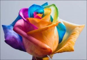Радужные розы | Бизнес идеи