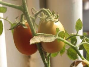 Продажа саженцев для огорода на балконе | Бизнес идеи