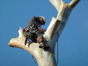 Удаление и обрезка деревьев | Бизнес идеи
