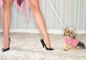 Пошив одежды для собак | Бизнес идеи