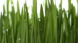 Выращивание зелени на продажу в любое время года | Бизнес идеи