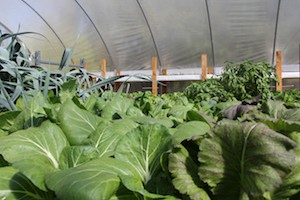 Создание городской фермы | Бизнес идеи