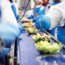 Производство салатов для оптовой реализации | Бизнес планы