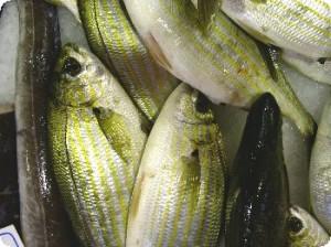 Магазин свежей рыбы и морепродуктов | Бизнес идеи