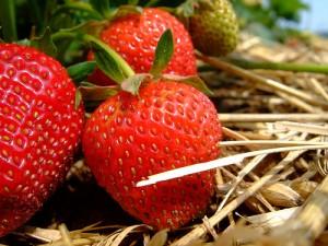 Выращивание ягод в домашних условиях | Бизнес идеи