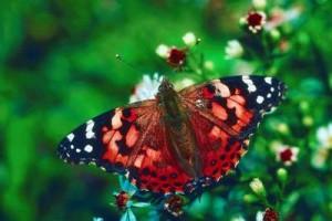 Живые бабочки на праздник | Бизнес идеи