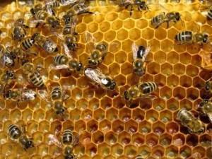 Интернет-магазин пчеловодческого инвентаря | Бизнес идеи