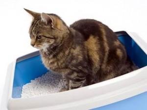 Производство и реализация наполнителей для кошачьих туалетов | Бизнес планы