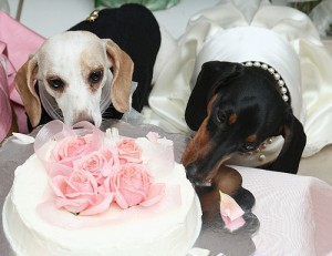 Свадьбы для собак | Бизнес идеи
