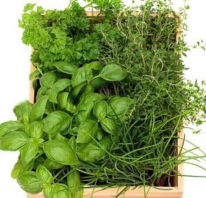Выращивание лекарственных трав | Бизнес идеи